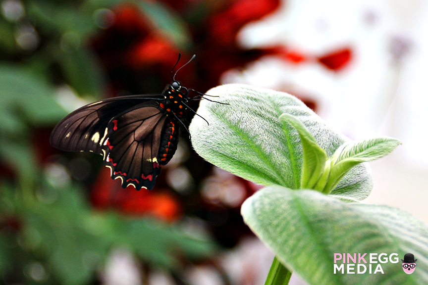 Butterflies-and-Blooms-apines8