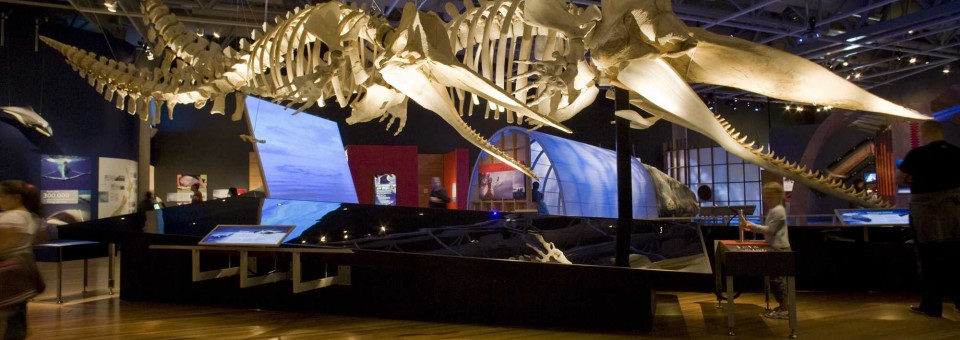 Whales: Giants of the Deep at San Diego Natural History Museum