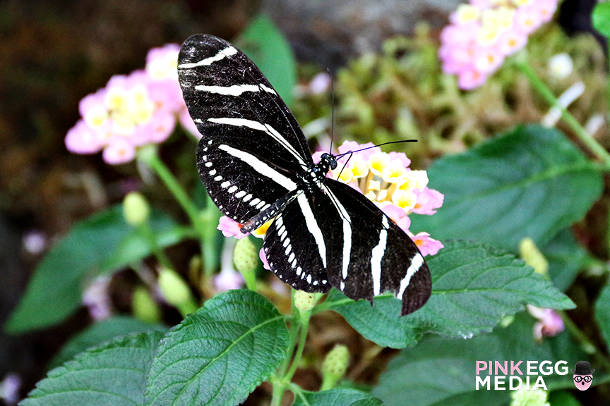 Butterflies & Blooms at The Conservatory of Flowers
